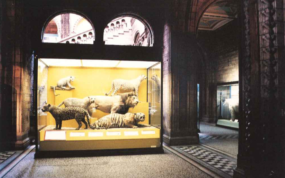 Natural History Museum, London, I