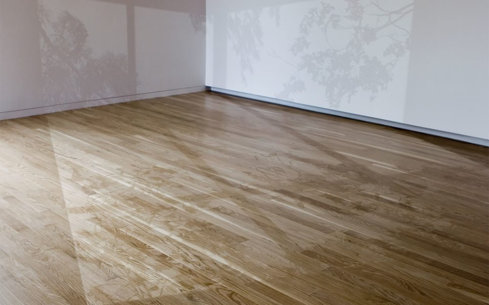 Shadow of trees cast over a room with white walls and hardwood floors