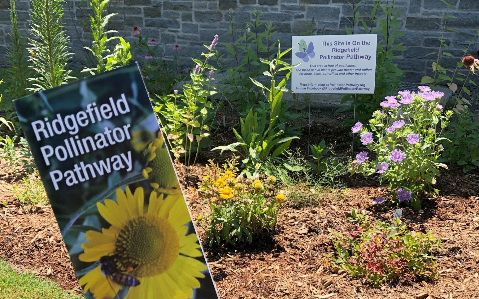 Ridgefield Pollinator Pathway