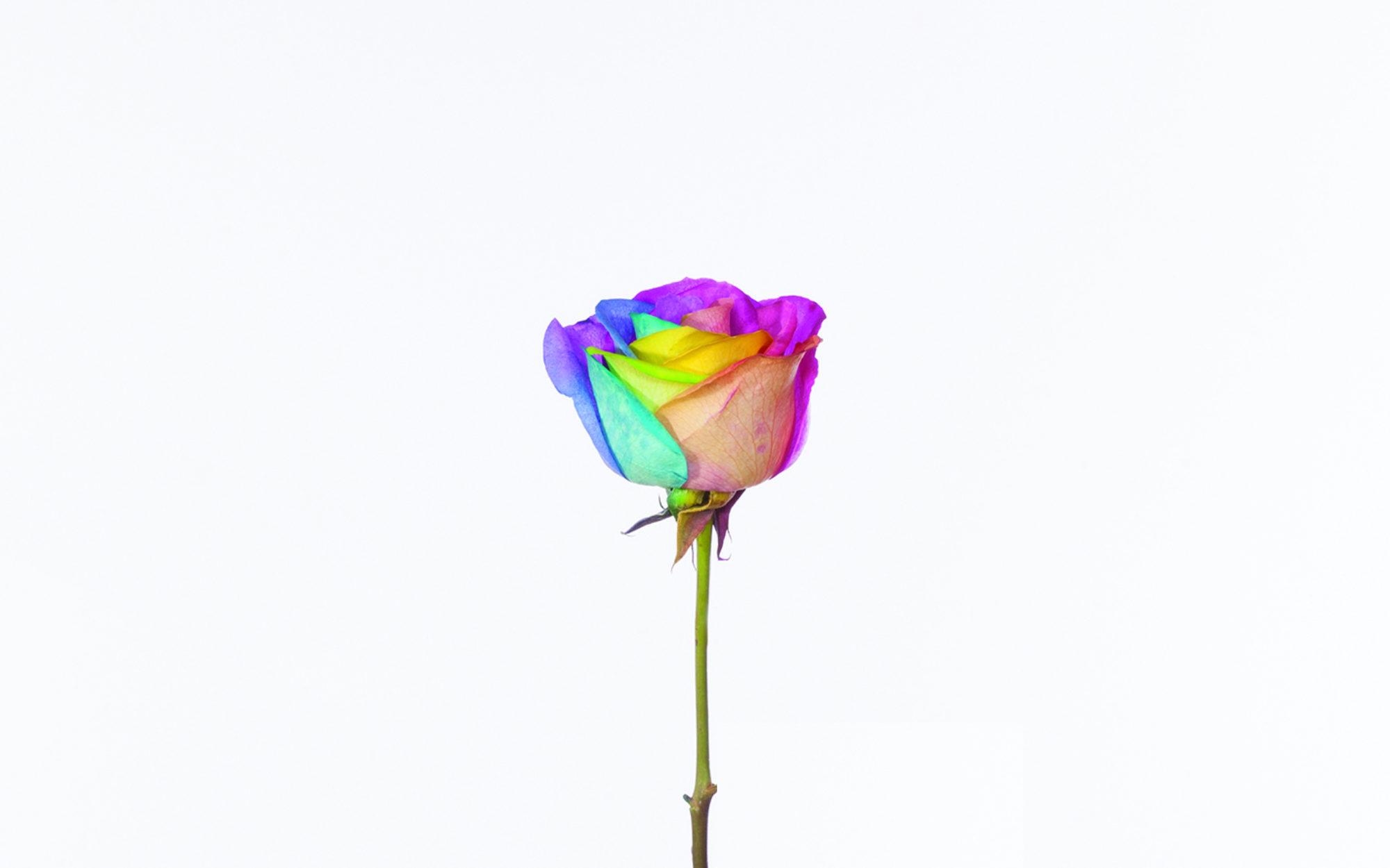 Virginia Poundstone Flower Mutations